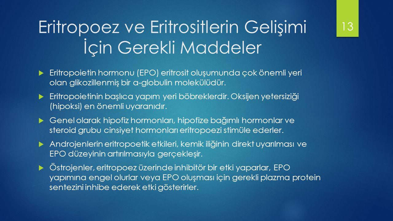 Eritropoez ve Eritrositlerin Gelişimi İçin Gerekli Maddeler  Eritropoietin hormonu (EPO) eritrosit oluşumunda çok önemli yeri olan glikozillenmiş bir