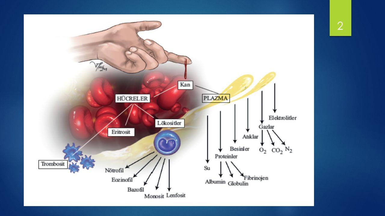 KAN DOKUSU Plazma (Sıvı bölüm) – Hafif alkali, proteinden zengin sıvıdır.