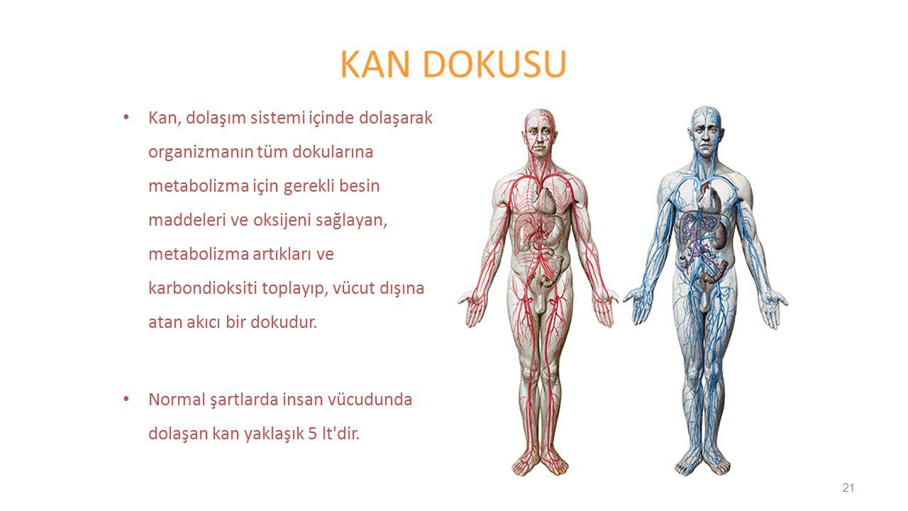 KAN DOKUSU Kan, dolaşım sistemi içinde dolaşarak organizmanın tüm dokularına metabolizma için gerekli besin maddeleri ve oksijeni sağlayan, metabolizm