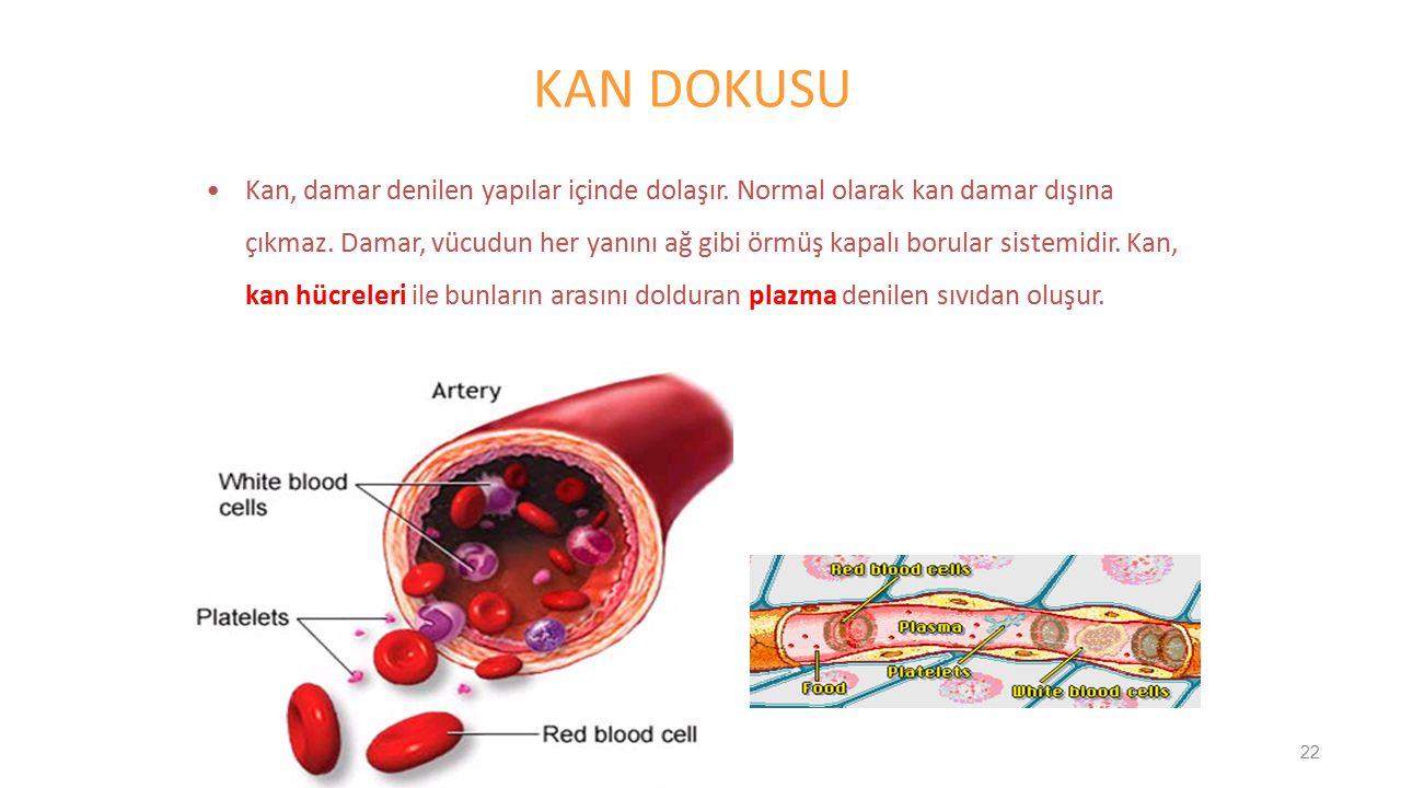 Kan, damar denilen yapılar içinde dolaşır. Normal olarak kan damar dışına çıkmaz. Damar, vücudun her yanını ağ gibi örmüş kapalı borular sistemidir. K