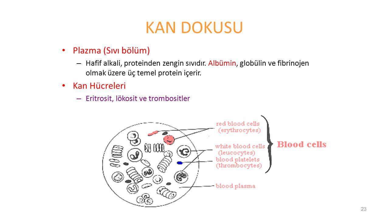 KAN DOKUSU Plazma (Sıvı bölüm) – Hafif alkali, proteinden zengin sıvıdır. Albümin, globülin ve fibrinojen olmak üzere üç temel protein içerir. Kan Hüc