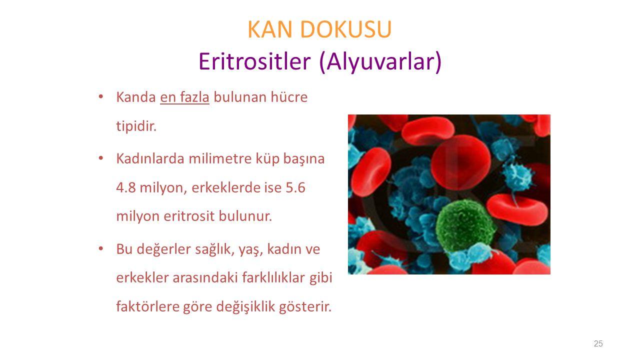 KAN DOKUSU Eritrositler (Alyuvarlar) Kanda en fazla bulunan hücre tipidir. Kadınlarda milimetre küp başına 4.8 milyon, erkeklerde ise 5.6 milyon eritr