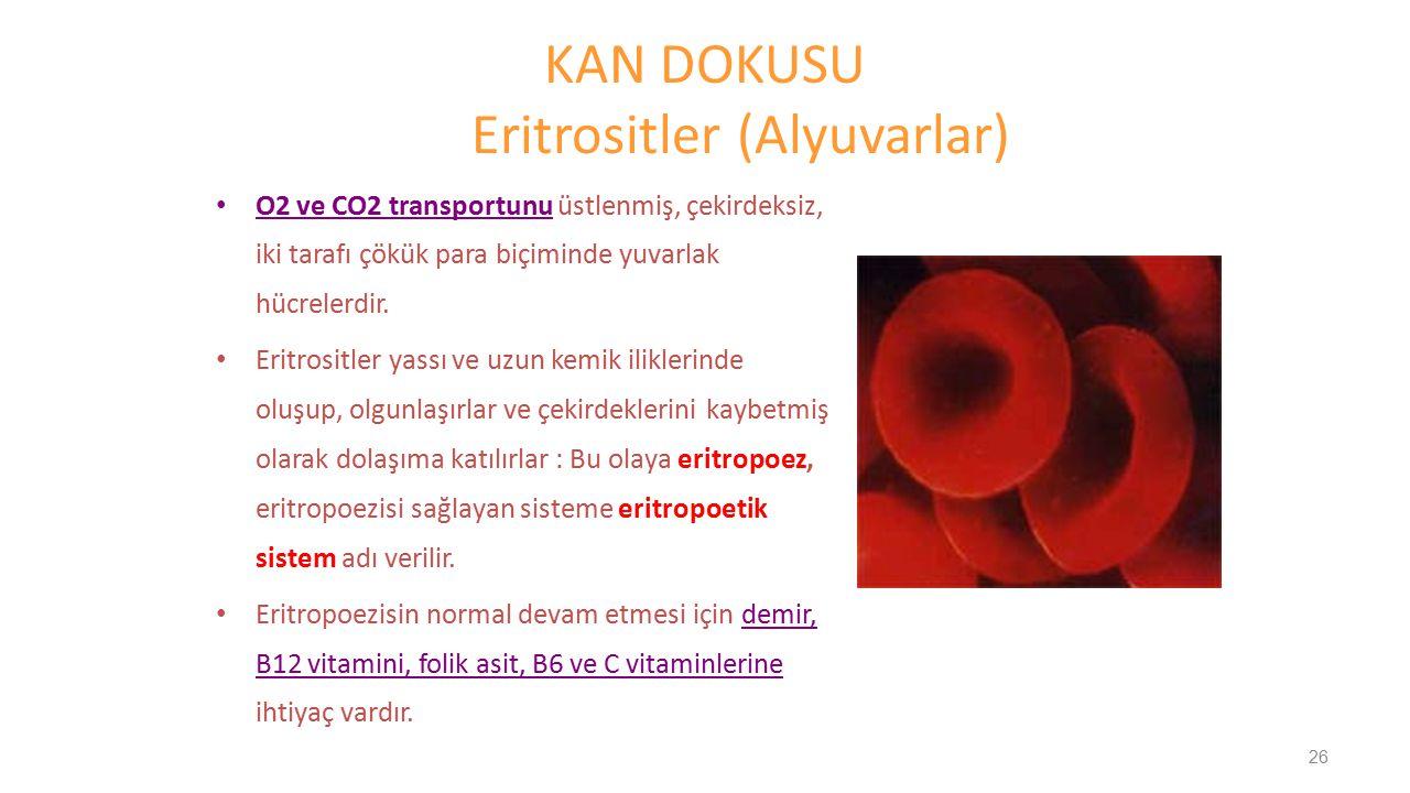 KAN DOKUSU Eritrositler (Alyuvarlar) O2 ve CO2 transportunu üstlenmiş, çekirdeksiz, iki tarafı çökük para biçiminde yuvarlak hücrelerdir. Eritrositler