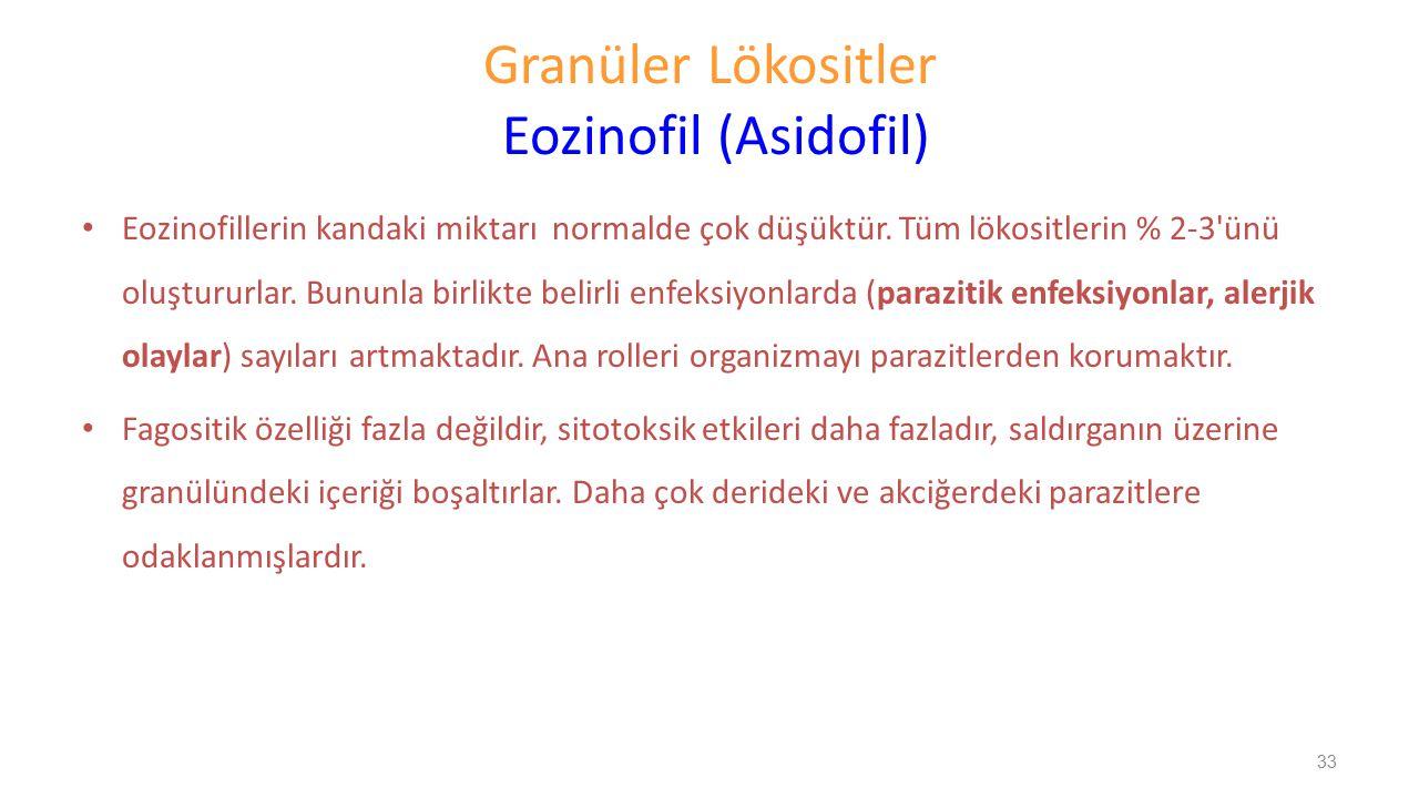 Granüler Lökositler Eozinofil (Asidofil) Eozinofillerin kandaki miktarı normalde çok düşüktür. Tüm lökositlerin % 2-3'ünü oluştururlar. Bununla birlik