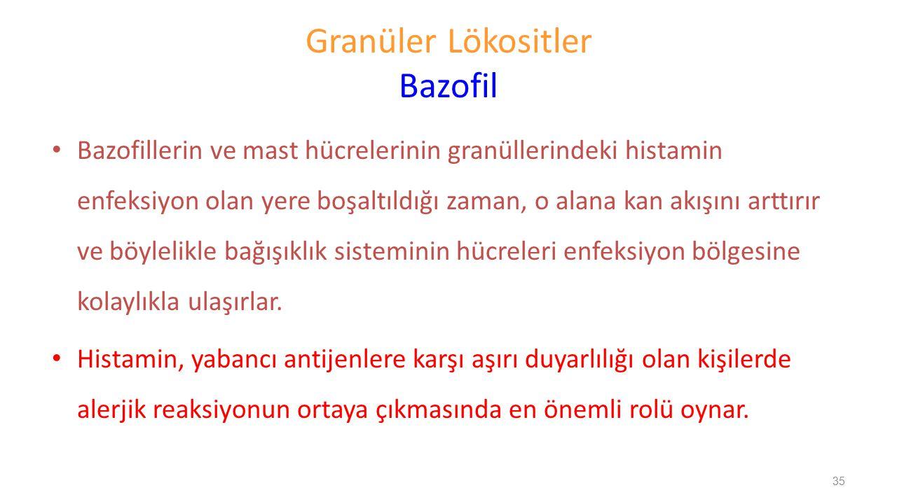 Granüler Lökositler Bazofil Bazofillerin ve mast hücrelerinin granüllerindeki histamin enfeksiyon olan yere boşaltıldığı zaman, o alana kan akışını ar