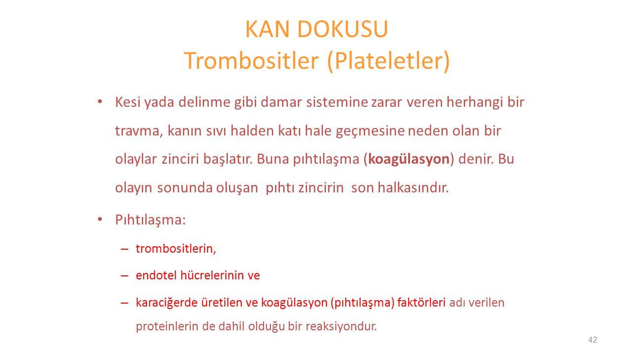 KAN DOKUSU Trombositler (Plateletler) Kesi yada delinme gibi damar sistemine zarar veren herhangi bir travma, kanın sıvı halden katı hale geçmesine ne
