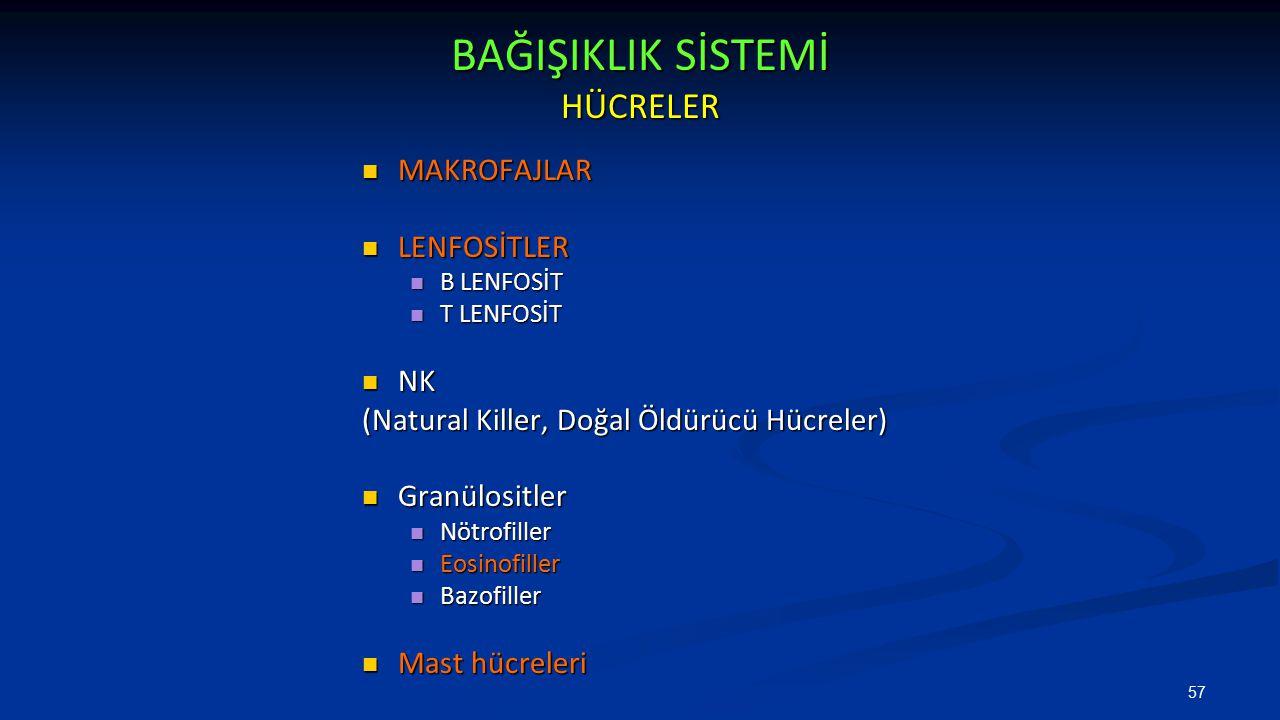BAĞIŞIKLIK SİSTEMİ HÜCRELER MAKROFAJLAR MAKROFAJLAR LENFOSİTLER LENFOSİTLER B LENFOSİT B LENFOSİT T LENFOSİT T LENFOSİT NK NK (Natural Killer, Doğal Ö
