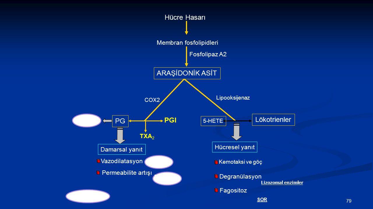 Hücre Hasarı Membran fosfolipidleri Fosfolipaz A2 Damarsal yanıt Vazodilatasyon Permeabilite artışı ARAŞİDONİK ASİT PG TXA 2 PGI Lökotrienler 5-HETE L