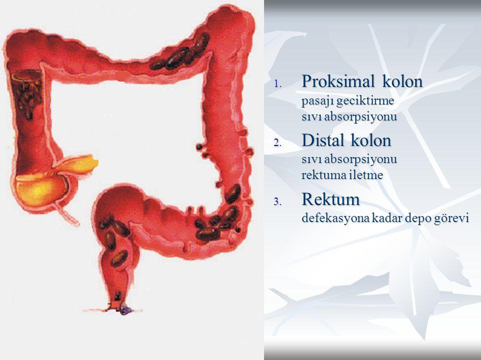 1. Proksimal kolon pasajı geciktirme sıvı absorpsiyonu 2. Distal kolon sıvı absorpsiyonu rektuma iletme 3. Rektum defekasyona kadar depo görevi