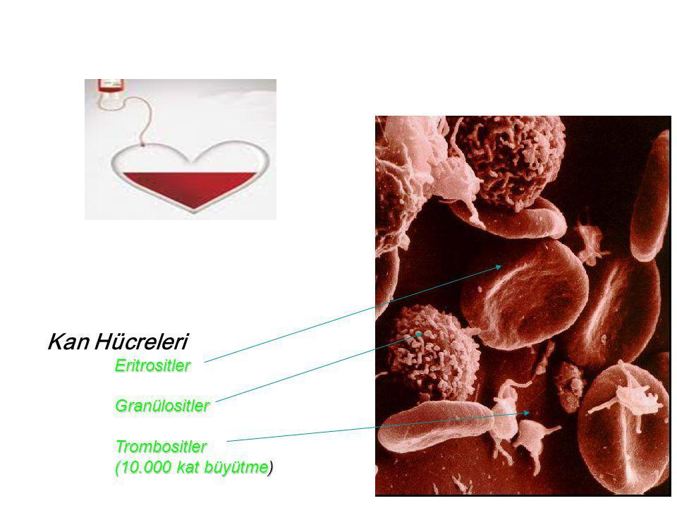  Genellikle eritrosit transfüzyonlarında tercih edilen iğneler 19G yada daha kalındır.