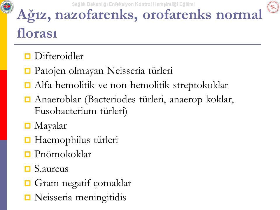 Sağlık Bakanlığı Enfeksiyon Kontrol Hemşireliği Eğitimi Ağız, nazofarenks, orofarenks normal florası  Difteroidler  Patojen olmayan Neisseria türler
