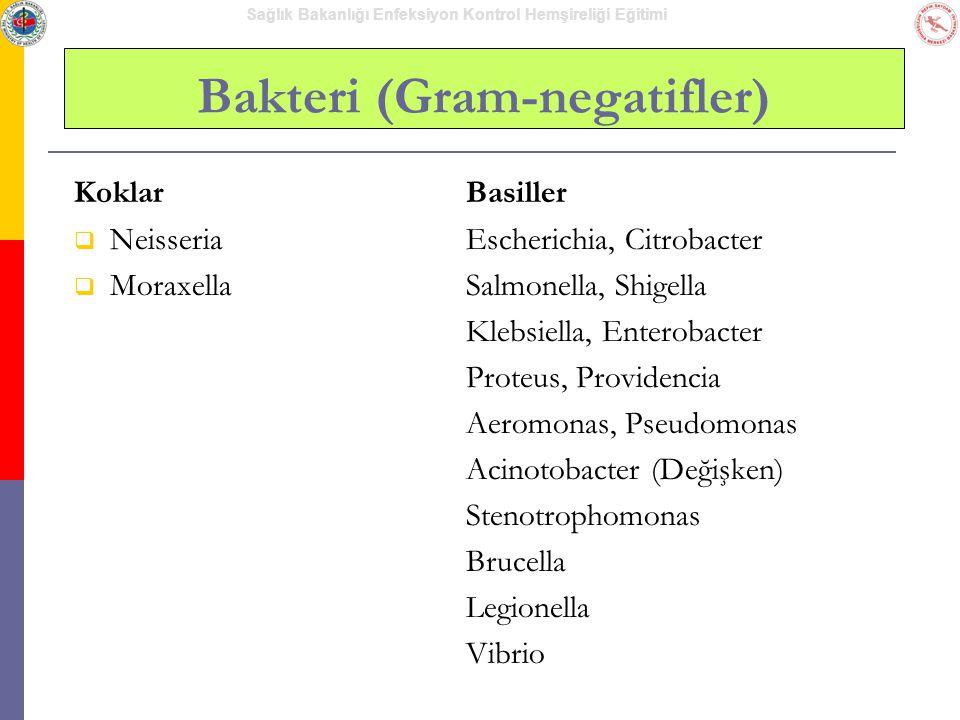 Sağlık Bakanlığı Enfeksiyon Kontrol Hemşireliği Eğitimi Bakteri (Gram-negatifler) Koklar  Neisseria  Moraxella Basiller Escherichia, Citrobacter Sal