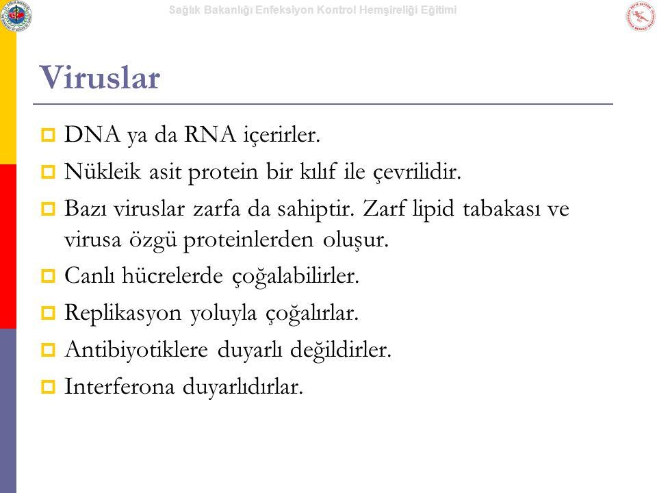 Sağlık Bakanlığı Enfeksiyon Kontrol Hemşireliği Eğitimi Viruslar  DNA ya da RNA içerirler.  Nükleik asit protein bir kılıf ile çevrilidir.  Bazı vi