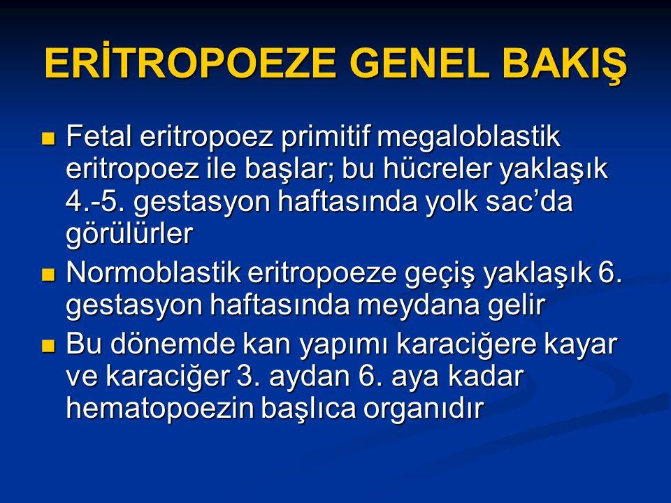 ERİTROPOEZE GENEL BAKIŞ Fetal eritropoez primitif megaloblastik eritropoez ile başlar; bu hücreler yaklaşık 4.-5.