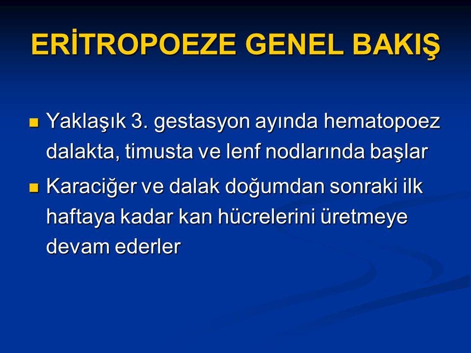 ERİTROPOEZE GENEL BAKIŞ Yaklaşık 3.