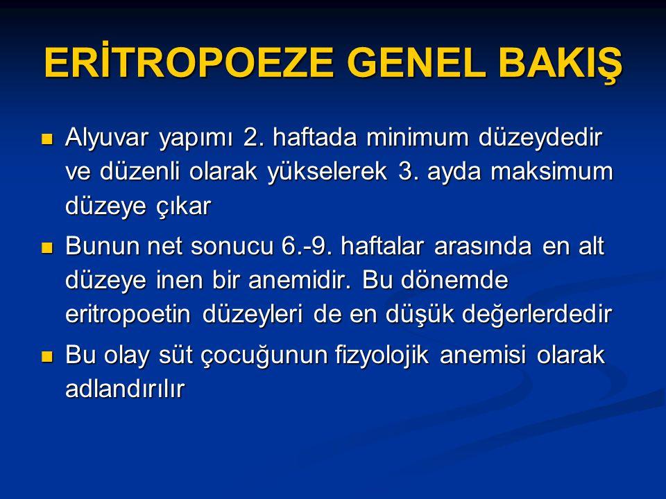ERİTROPOEZE GENEL BAKIŞ Alyuvar yapımı 2.