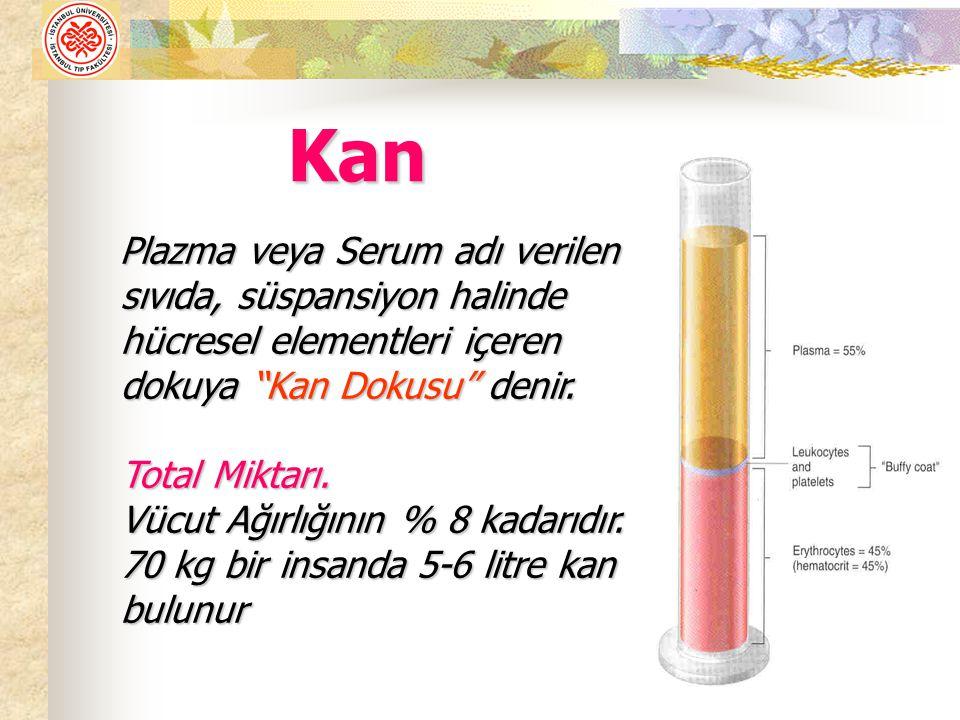 Plazma veya Serum adı verilen sıvıda, süspansiyon halinde hücresel elementleri içeren dokuya Kan Dokusu denir.