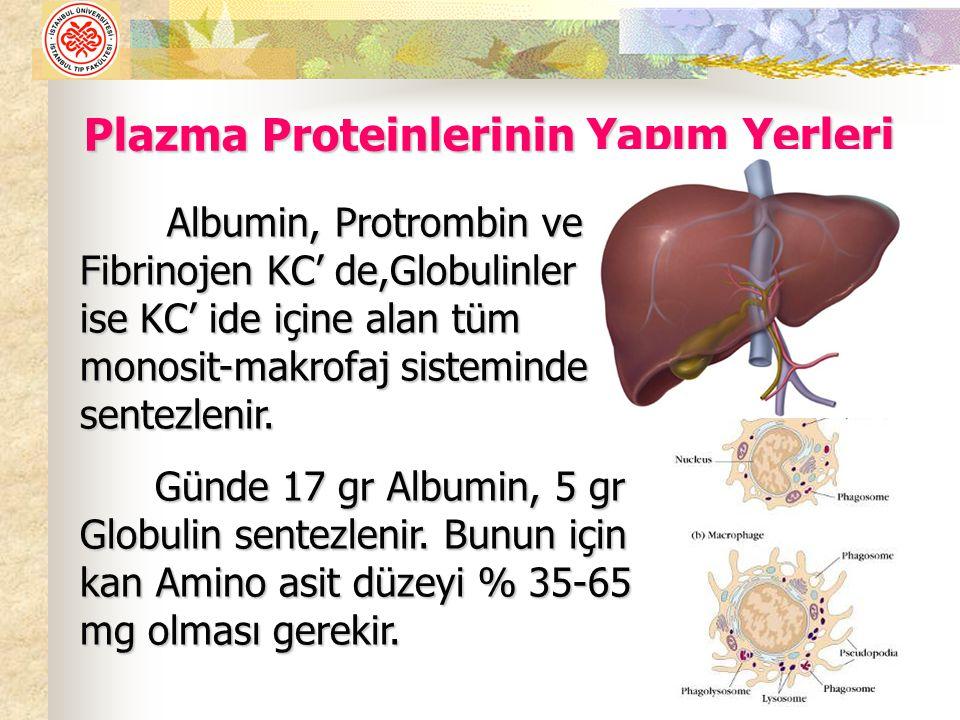 Albumin, Protrombin ve Fibrinojen KC' de,Globulinler ise KC' ide içine alan tüm monosit-makrofaj sisteminde sentezlenir.