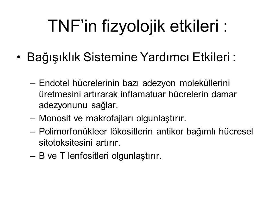 TNF'in fizyolojik etkileri : Bağışıklık Sistemine Yardımcı Etkileri : –Endotel hücrelerinin bazı adezyon moleküllerini üretmesini artırarak inflamatua