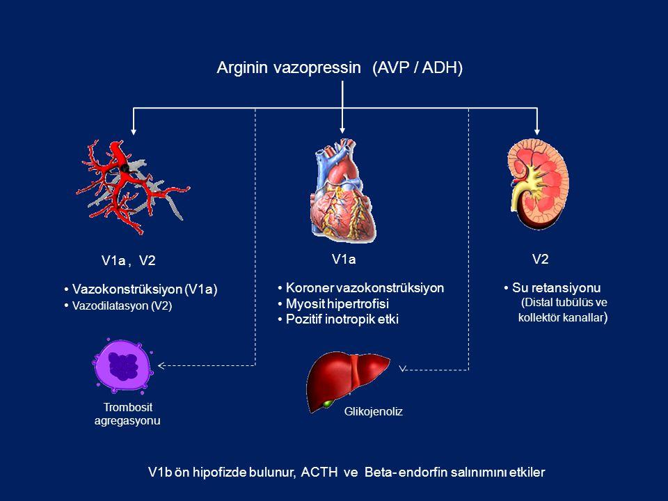 Arginin vazopressin (AVP / ADH) Koroner vazokonstrüksiyon Myosit hipertrofisi Pozitif inotropik etki Su retansiyonu (Distal tubülüs ve kollektör kanal