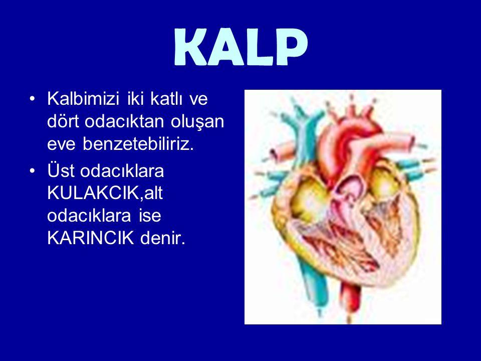 KALP Kalbimizi iki katlı ve dört odacıktan oluşan eve benzetebiliriz. Üst odacıklara KULAKCIK,alt odacıklara ise KARINCIK denir.