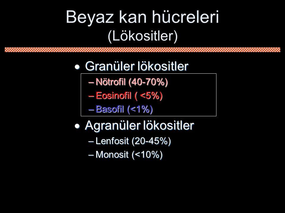  Granüler lökositler –Nötrofil (40-70%) –Eosinofil ( <5%) –Basofil (<1%)  Agranüler lökositler –Lenfosit (20-45%) –Monosit (<10%) Beyaz kan hücreler