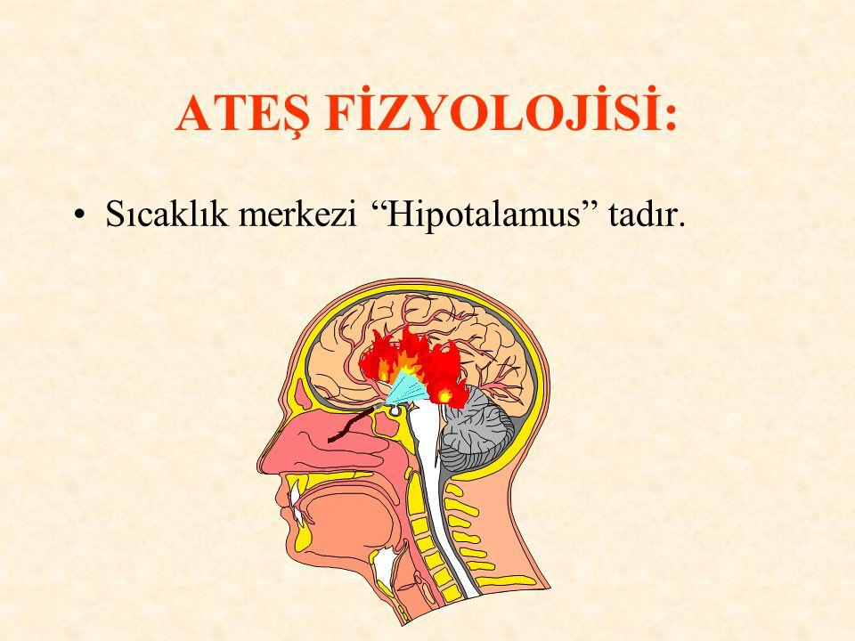"""Sıcaklık merkezi """"Hipotalamus"""" tadır."""