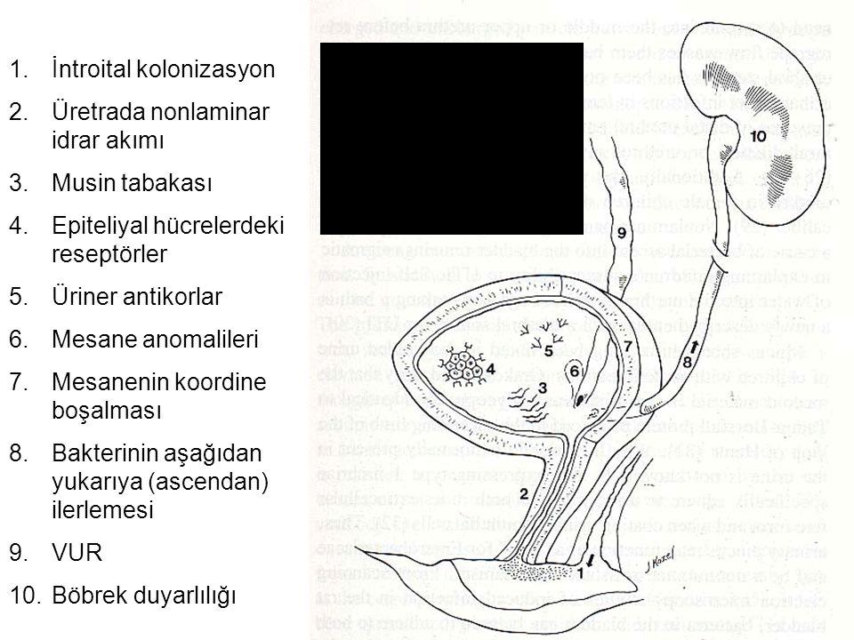 1.İntroital kolonizasyon 2.Üretrada nonlaminar idrar akımı 3.Musin tabakası 4.Epiteliyal hücrelerdeki reseptörler 5.Üriner antikorlar 6.Mesane anomali