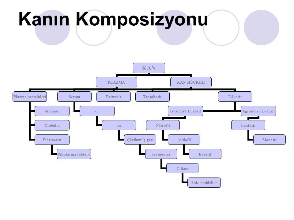 Kanın Komposizyonu KAN PLAZMA Plazma proteinleri Albumin Glubulin Fibrinojen Pıhtılaşma faktörü Serum su tuz Çözünmüş gaz hormonlar Glikoz Atık maddeller KAN HÜCRESİ EritrositTrombositLökosit Granüler Lökosit Nötrofil Asidofil Basofil Agranüler Lökosit Lenfosit Monosit