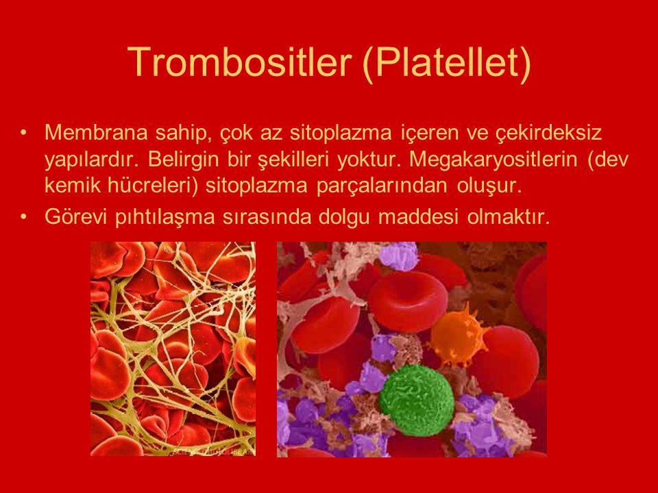 Trombositler (Platellet) Membrana sahip, çok az sitoplazma içeren ve çekirdeksiz yapılardır. Belirgin bir şekilleri yoktur. Megakaryositlerin (dev kem