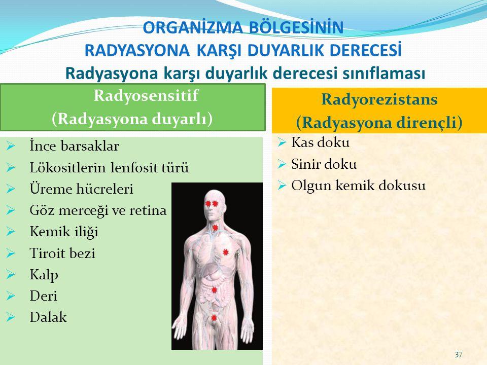 ORGANİZMA BÖLGESİNİN RADYASYONA KARŞI DUYARLIK DERECESİ Radyasyona karşı duyarlık derecesi sınıflaması Radyosensitif (Radyasyona duyarlı) Radyorezista