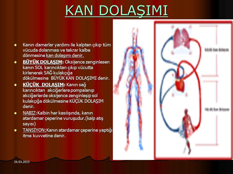 KAN DOLAŞIMI Kanın damarlar yardımı ile kalpten çıkıp tüm vücuda dolanması ve tekrar kalbe dönmesine kan dolaşımı denir. BÜYÜK DOLAŞIM: Oksijence zeng