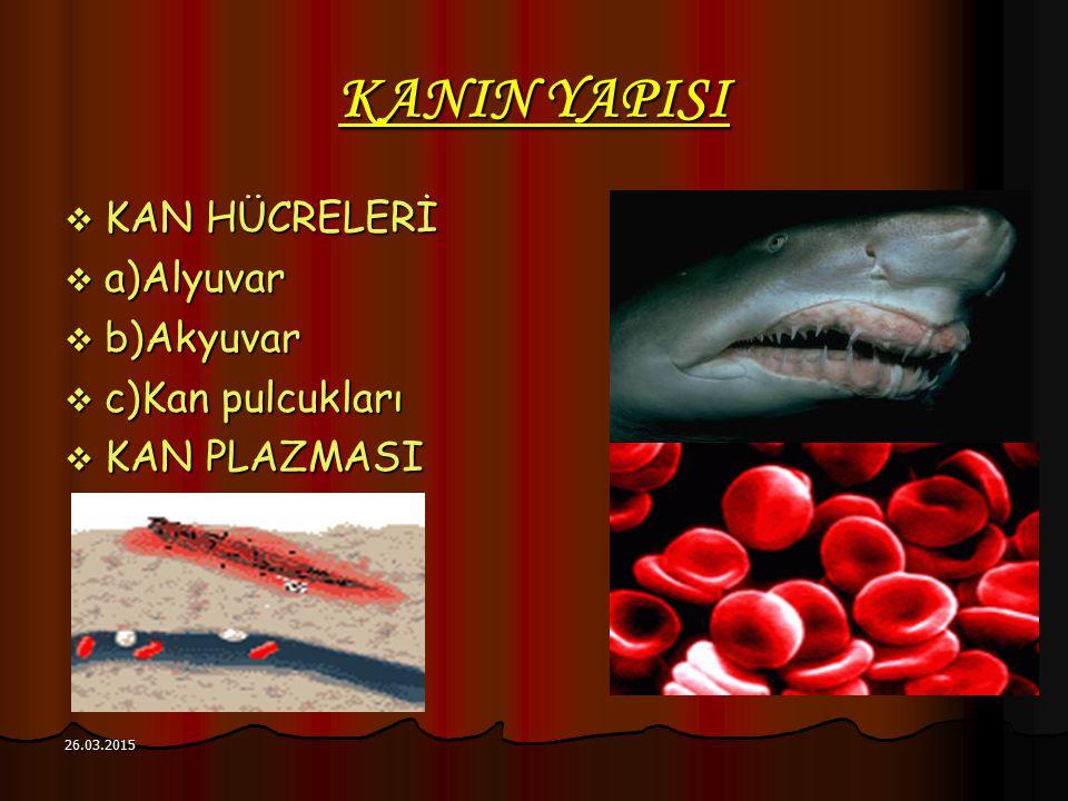 KANIN YAPISI  KAN HÜCRELERİ  a)Alyuvar  b)Akyuvar  c)Kan pulcukları  KAN PLAZMASI