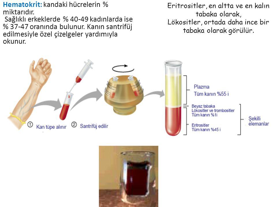 Fiziksel özellikleri Rengi kırmızı – açık-koyu Hafif tuzlu Yağ asitlerinden dolayı özel kokulu Sıcaklığı 38 o C pH – 7.35-7.45 E;5-6 lt, K;4-5 lt