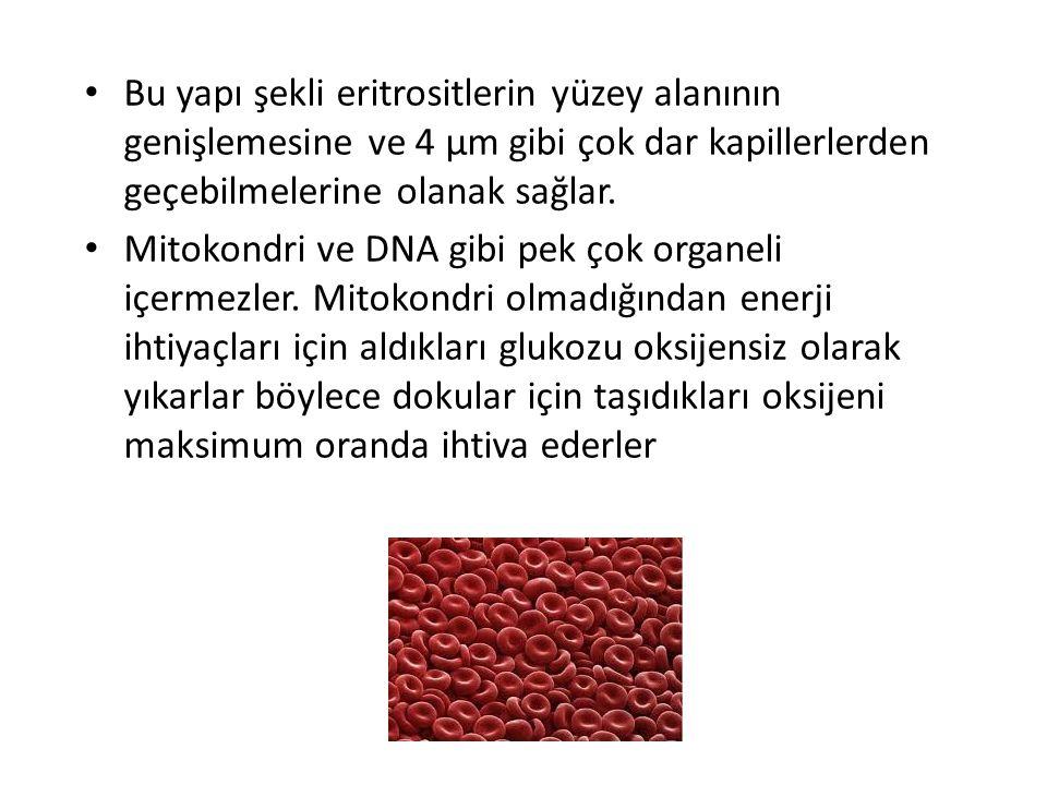 1. Alyuvarlar (Eritrositler) Kan hücrelerinin % 50`sini oluştururlar. Taşıdıkları hemoglobinden (15g/dl) dolayı kırmızı renktedirler 1mm 3 kanda – erk