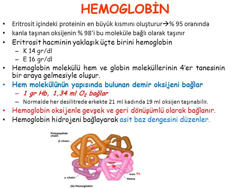 Hemoglobin globulin + hem Her bir molekül Hb 4 molekül oksijen taşır O 2 taşıyan Hb CO 2 taşınımına yardım eder