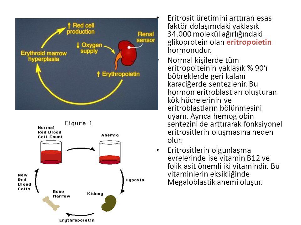Eritrosit üretiminin temel düzenleyicisi olarak doku oksijenlenmesi: Dokulara taşınan oksijen miktarının azalmasına neden olan her koşul eritrosit üre