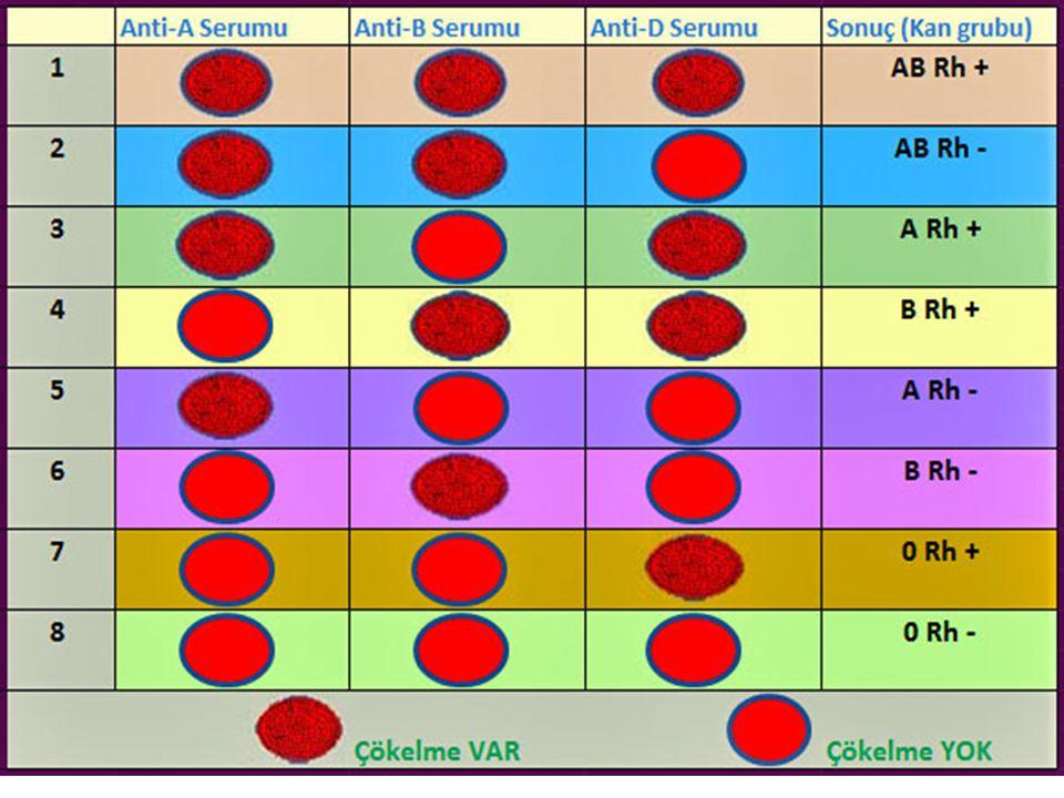 Rh kan grupları 6 tip Rh faktörü vardır C, D, E ve c, d, e Tip D en yaygınıdır