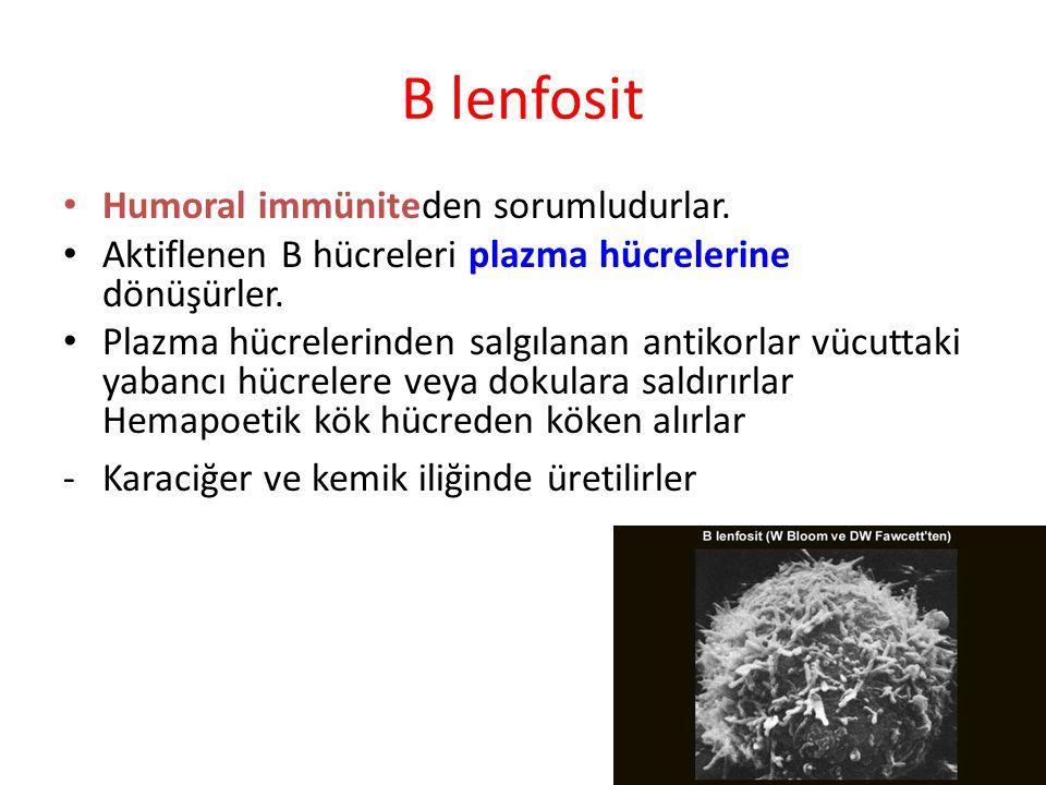 B LENFOSİTLER – HUMORAL BAĞIŞIKLIK Antikor üretimi T LENFOSİTLER – HÜCRE-ARACILI BAĞIŞIKLIK – SİTOTOKSİK – Virüs, bakteri ve kanser hücrelerine karşı