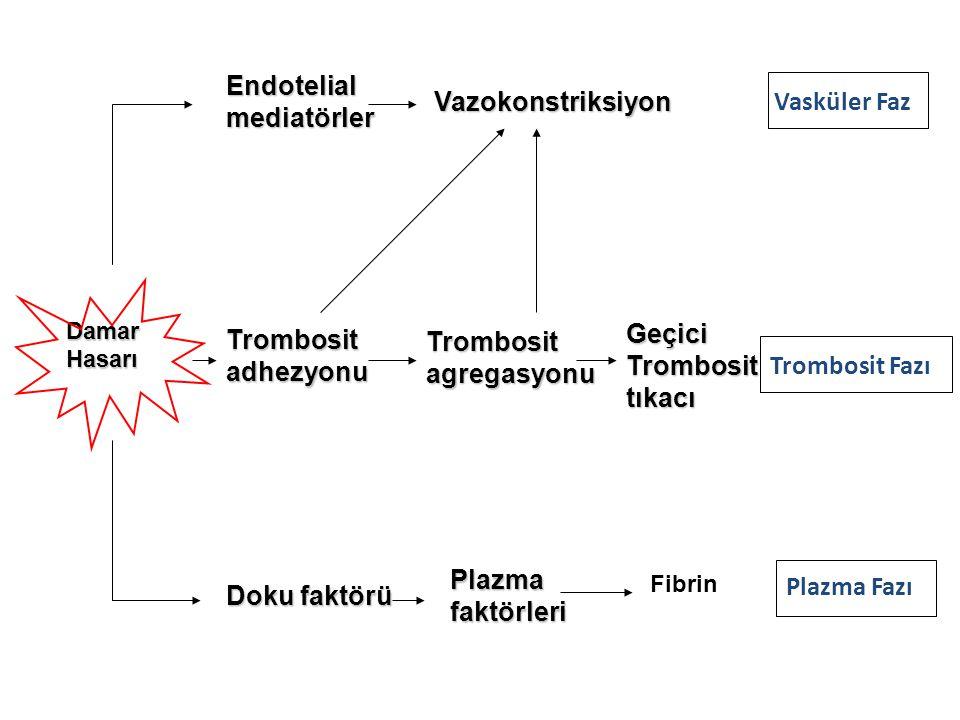 Trombositler Şişerler ve düzensiz şekil alırlar, sayısız psödöpotlar uzatırlar Kasılarak içlerindeki aktif maddeleri salarlar Adezyon Agregasyon