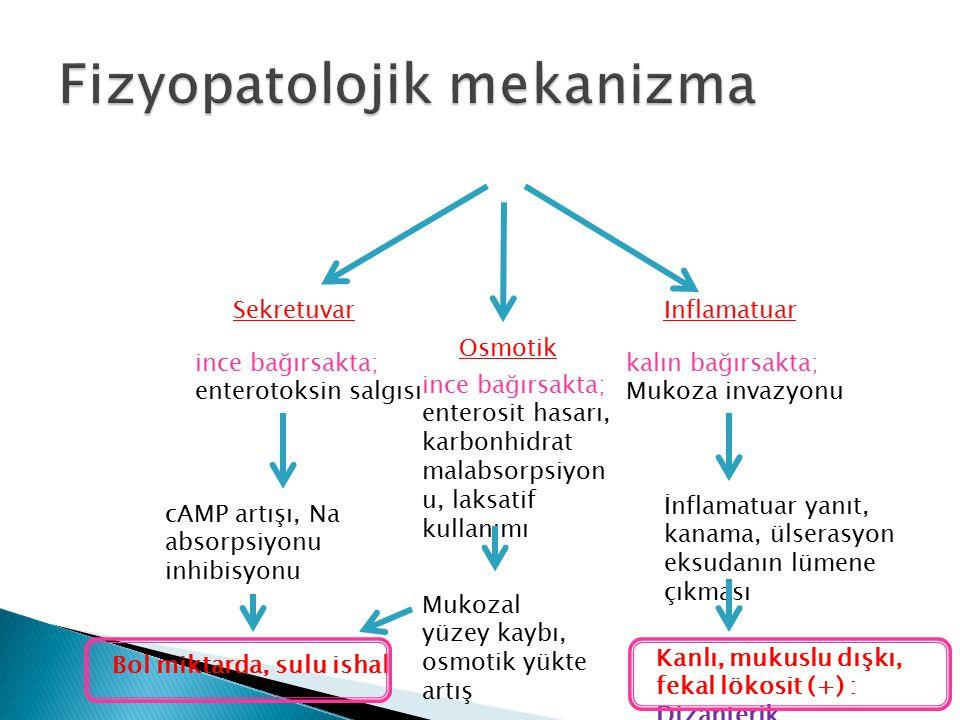 SekretuvarInflamatuar ince bağırsakta; enterotoksin salgısı kalın bağırsakta; Mukoza invazyonu Osmotik ince bağırsakta; enterosit hasarı, karbonhidrat