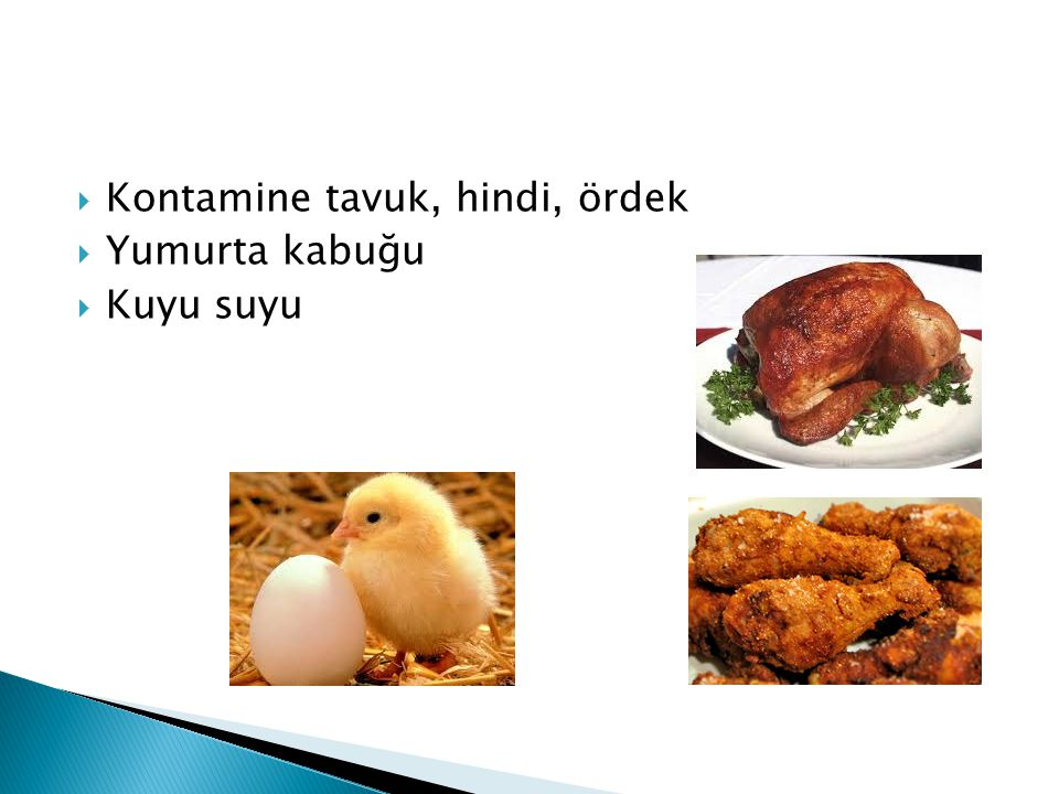  Kontamine tavuk, hindi, ördek  Yumurta kabuğu  Kuyu suyu