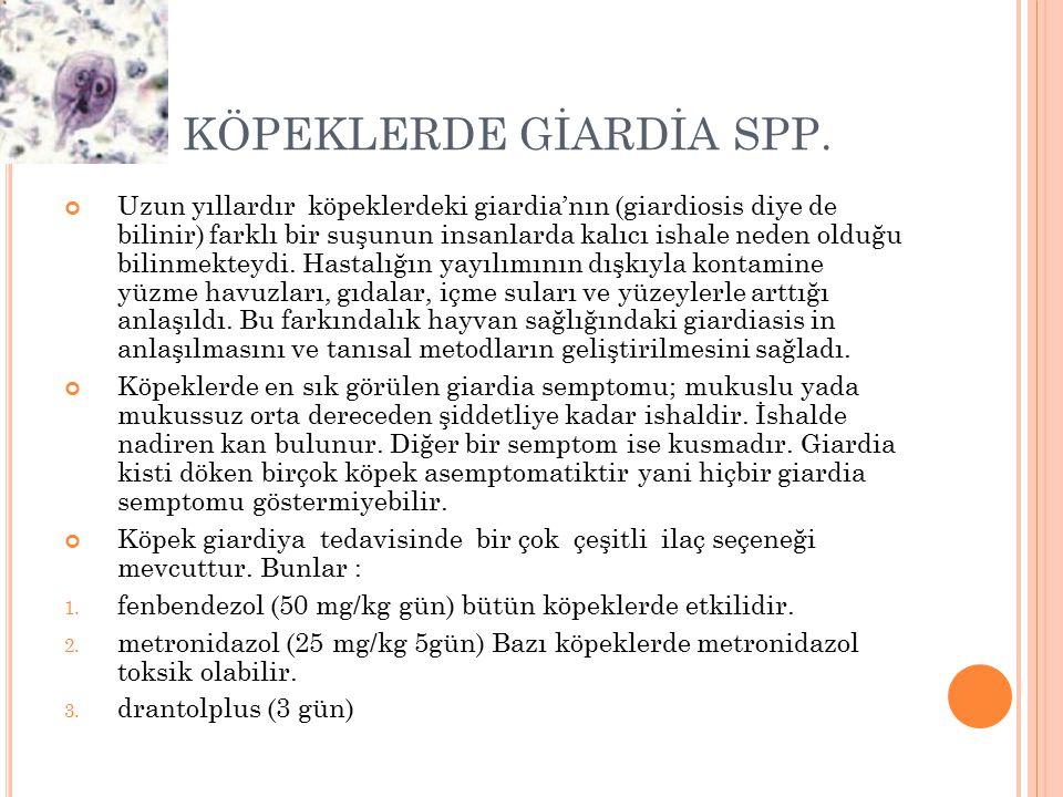 KÖPEKLERDE GİARDİA SPP. Uzun yıllardır köpeklerdeki giardia'nın (giardiosis diye de bilinir) farklı bir suşunun insanlarda kalıcı ishale neden olduğu