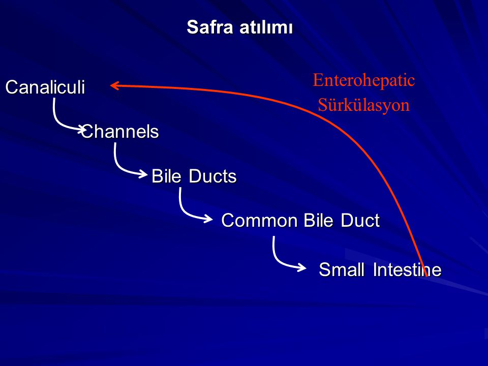 Safra atılımı Canaliculi Channels Channels Bile Ducts Common Bile Duct Common Bile Duct Small Intestine Small Intestine Enterohepatic Sürkülasyon