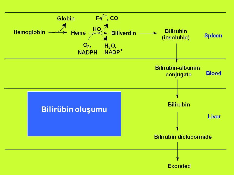 Basamak 1: Bilirübin oluşumu Enzim: Hem oksigenaz Yer : dalak; aynı zamanda krc, böbrek