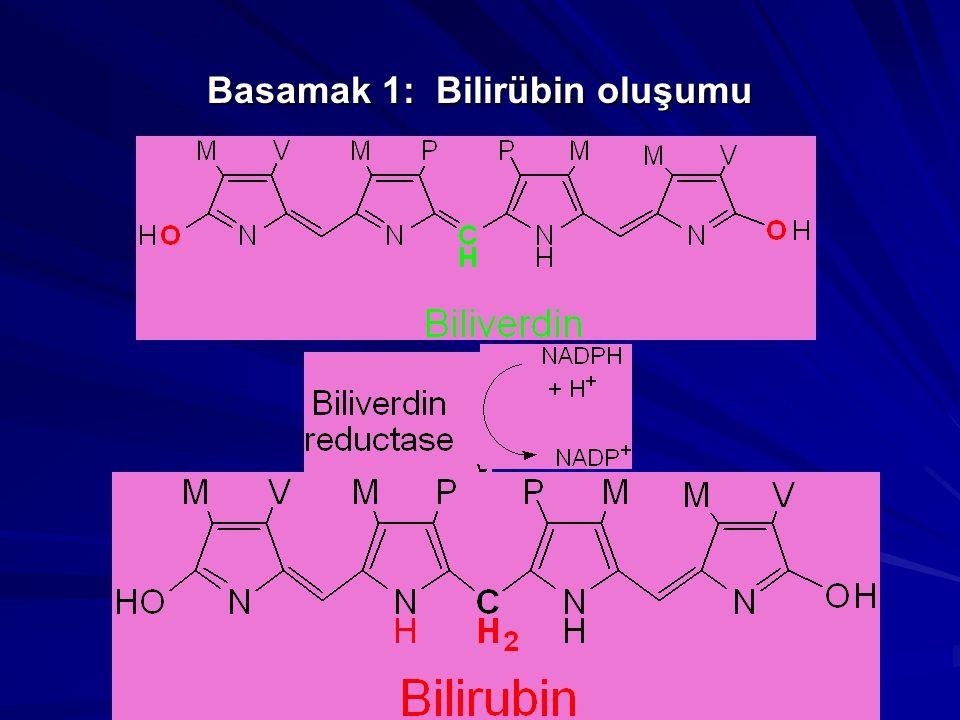 Basamak 2: Bilirübinin serumda taşınması Bilirübin suda-çözünür Değildir Bilirübin kanda serum albumin'e, bağlanarak taşınır