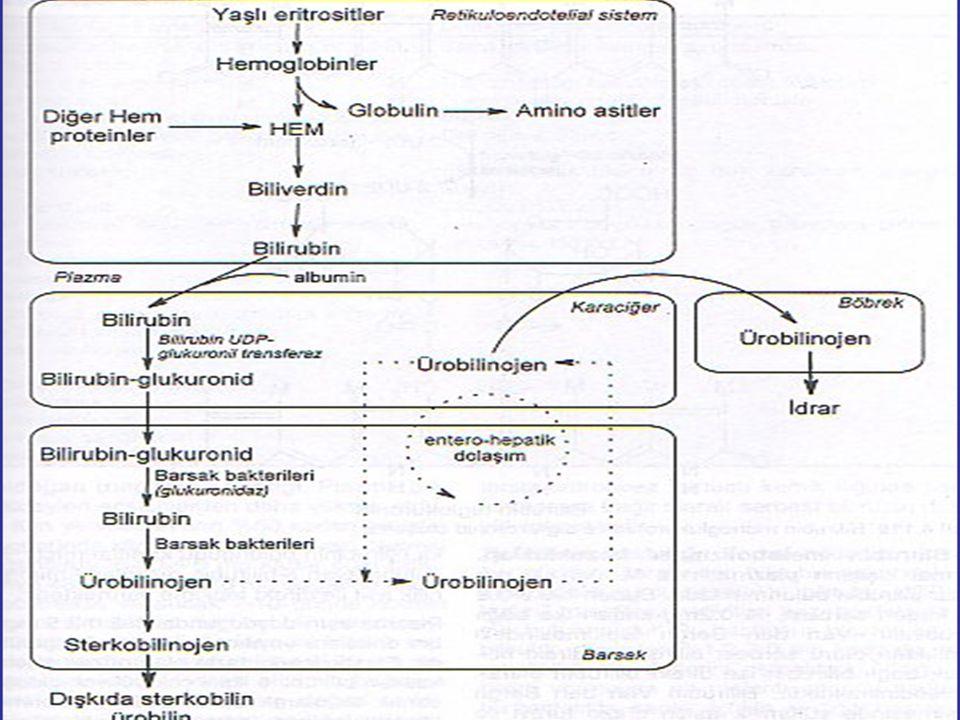 Hem, h em oksijenaz sistemine ulaştığında h emin olmuştur (Fe 3 + ) Hem oksijenaz sistemi substrat tarafından indüklenebilir.