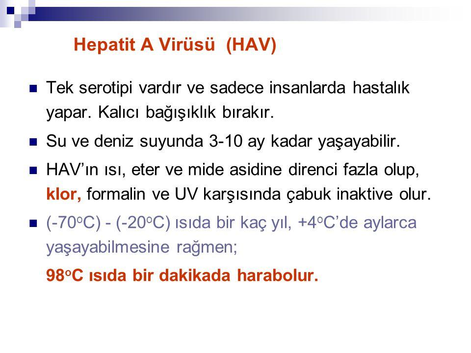 Hepatit A Virüsü (HAV) Tek serotipi vardır ve sadece insanlarda hastalık yapar. Kalıcı bağışıklık bırakır. Su ve deniz suyunda 3-10 ay kadar yaşayabil