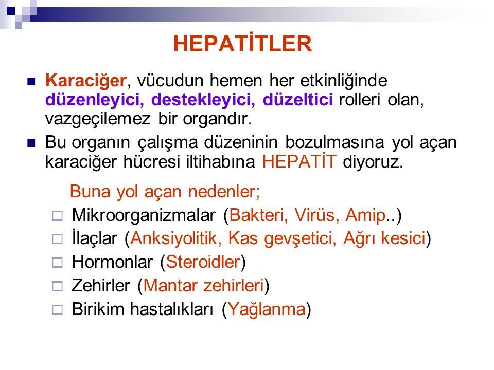 HEPATİTLER Karaciğer, vücudun hemen her etkinliğinde düzenleyici, destekleyici, düzeltici rolleri olan, vazgeçilemez bir organdır. Bu organın çalışma