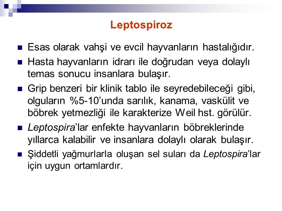 Leptospiroz Esas olarak vahşi ve evcil hayvanların hastalığıdır. Hasta hayvanların idrarı ile doğrudan veya dolaylı temas sonucu insanlara bulaşır. Gr
